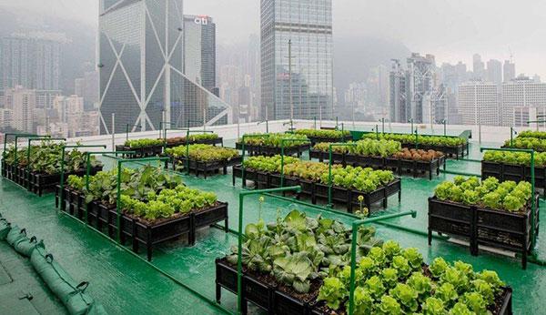 Architecture Trends - Urban hydroponics